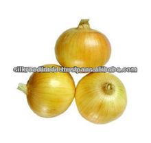 Fresh Onion Yellow