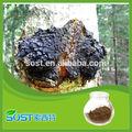عشبة صينية مع 30% chaga استخراج chaga استخراج مسحوق فطر بوليساكيريد