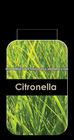Lemongrass Aroma Oil for Body Massage
