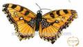 Trang trí cánh bướm lông nhân tạo giá rẻ
