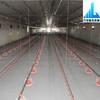 automatic commercial chicken equipment chicken feeding equipment
