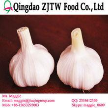 China shandong white garlic pickled
