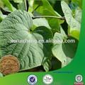 Kava poudre d'extrait, Kava kava racine