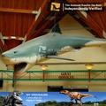 Mon Dino - Aquarium parc d'attractions modèles animaux shark modèle