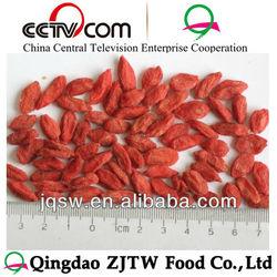 fruit goji qinghai goji