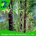 mais recente 2014 bambu nigra sementes para o plantio