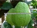 el cultivo de frutas bolsa de guayaba