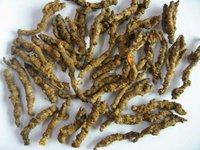Coptis Root Extract/Coptis chinensis P.E.