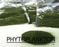 marine Phytoplankton pulver 100 Gramm beutel