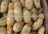 Fresh Potato Distributor from Shaanxi China for India/Bubai/Thailand/Malaysia