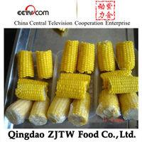 IQF Sweet Corn in Frozen Sweet Corn Cuts and Frozen Sweet Corn Cobs