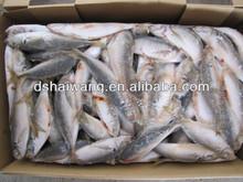 Frozen seafood horse mackerel fish sale 100-120 pcs