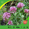 High quality and low price Valerian extract valeric acid