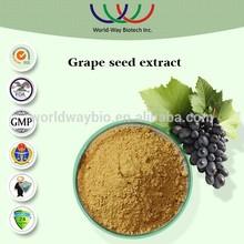 free sample HACCP KOF-K FDA exporter HPLC 100% natural grape seeds extract,95% procyanidin