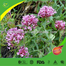 High quality and low price Valerian root extract powder