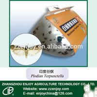 Plodia interpunctella disposable fly trap