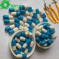 fda ha approvato selvatico cordyceps sinensis aweto alimentazione a base di erbe uomini capsule