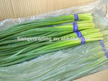 Fresh Garlic Sprout 2014