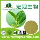 KOSHER Green Tea Extract/green tea powder
