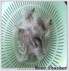 Washed grey duck feather 4-6cm for cheap sale