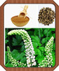 top quality black cohosh extract,natural black cohosh extracts powder