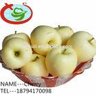 2014 Bulk Fresh Green Apples