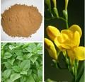 natural de vainilla natural de extracto de sabores y fragancias