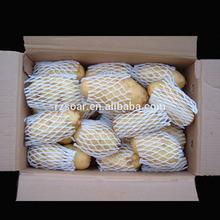 2014 New Long Chinese Fresh Holland Potatoes