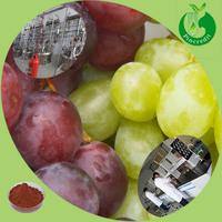 Hot sale high quality organic Grape Seed Extract 95% OPC