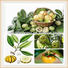 raw material garcinia cambogia extract/garcinia cambogia extract powder/garcinia cambogia extract private label