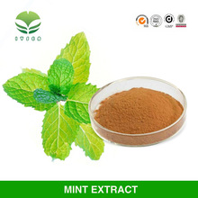 China Best quality and 100% Natural peppermint extract