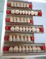 Fornecimento dental bom preço multi- camada de dentes de resina acrílica