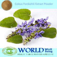 100% Pure Coleus Forskohlii Extract 10% Forskolin,Coleus Forskohlii Leaf Extract,Coleus Forskohlii Extract Powder