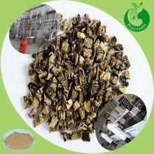 GMP Supply 2.5%Triterpenoid Saponis/Black Cohosh