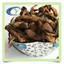 Natural high grade wild Nut-tree Mushroom