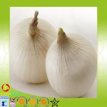 hot sale 2015 good quality Fresh white garlic from China