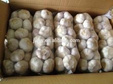 fresh garlic white/Normal white garlic/shandong jinxiang Garlic