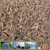 Chinese Angelica extract 10:1 5:1 Chinese Angelica P.E.