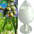 Pur et naturel extrait de garcinia cambogia médecine d'herbe pour perdre du poids