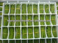 Green food, Individual quick frozen green beans bundle