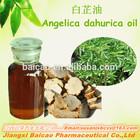 Natural Angelica Dahurica Extract/Angelica Dahurica Oil/ Angelica Dahurica Essential Oil