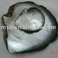 Blacklip madre de pearl ( MOP ) materia prima concha conchas