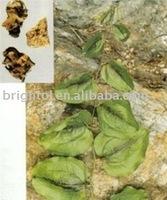 High quality Chinaroot Greenbrier Rhizome Powder