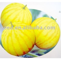 GK No.1 yellow skin and red flesh hybrid watermelon seeds
