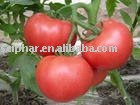 good quality plant extract Tomato extract Lycopene