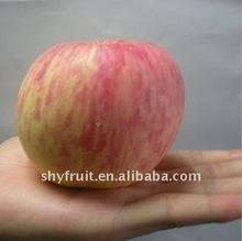 low price Fuji apple(hot)!