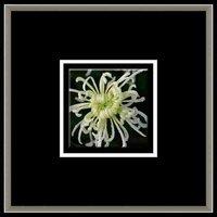 55x55 cm Crystal picture for black frame green flower