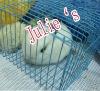 Spray low-carbon steel rabbit cage