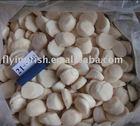 frozen Sea Scallops meat 21/30