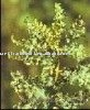 High quality Boswellia Serrata Extract